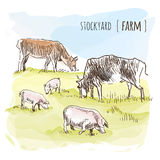 Vector Meat. Vector watercolor sketch of grazing cows and pigs Stock Photo