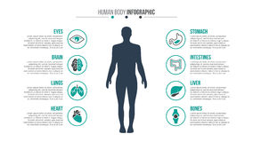 Vector medical and healthcare infographic. Vector human body infographic. Medical and healthcare template for presentation with 8 steps, options, parts or stock illustration