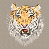 Vector menacing growling tiger Royalty Free Stock Images