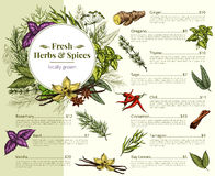 Vector menu price for spices and herbs shop Stock Photography