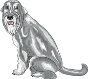 Vector. Middle schnauzer. Royalty Free Stock Images