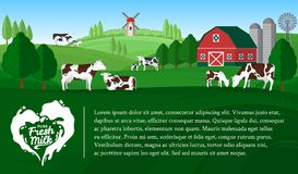 Vector milk illustration. With milk splash. Summer rural landscape with cows, calves and farm Royalty Free Stock Photos