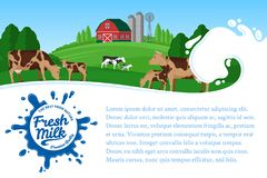 Vector milk illustration. With milk splash. Summer rural landscape with cows, calves and farm Stock Photos