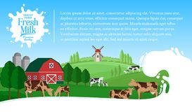 Vector milk illustration. With milk splash. Summer rural landscape with cows, calves and farm Royalty Free Stock Photography