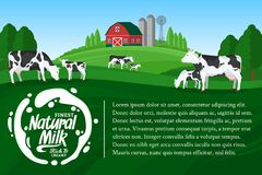Vector milk illustration. With milk splash. Summer rural landscape with cows, calves and farm Stock Photo