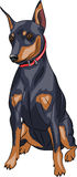 Vector. Miniature pinscher dog. Royalty Free Stock Image