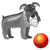 vector miniature Schnauzer dog Royalty Free Stock Photos