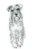 Vector Miniature Schnauzer dog Royalty Free Stock Photography