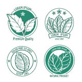 Vector mint leaf logo icons or menthol spearmint labels. Healthy fresh herb, peppermint organic badge illustration Royalty Free Stock Photo