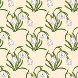 Vector modern illustration with gentle snowdrops. Vector modern illustration. Hello Spring. Seamless pattern with gentle snowdrops Stock Photos
