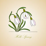Vector modern logo. Hello Spring. Vector modern illustration. Hello Spring. Card with gentle snowdrops Royalty Free Stock Photography