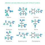 Vector Molekülstrukturen von den Aminosäuren, die auf Weißsatz lokalisiert werden Lizenzfreies Stockbild