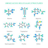 Vector Molekülstrukturen von den Aminosäuren, die auf Weißsatz lokalisiert werden Lizenzfreie Stockfotos