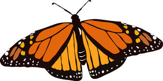 Vector Monarch butterfly. Monarch butterfly in flight, colorful wings spread Royalty Free Stock Photography