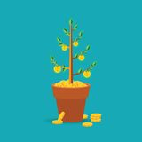 Vector money tree concept in flat style Royalty Free Stock Images