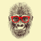 Vector monkey Stock Photography