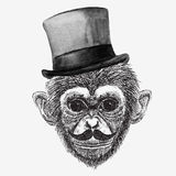 Vector monkey Royalty Free Stock Photography