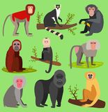 Vector monkeys apes breed rare animal set of cartoon macaque nature primate monkey chimpanzee and orangutan primate. Monkeys apes characters. Wild zoo jungle Royalty Free Stock Photos