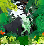 Vector monkeys in jungle Stock Images