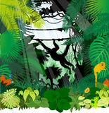 Vector monkeys in jungle. Rainforest Royalty Free Stock Images