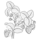Vector Monochrome Fruit Background. Hand Drawn Decorative Strawberry Royalty Free Stock Photo