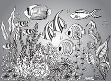 Vector monochrome hand drawn illustration with seashell Stock Photography