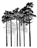 Vector monochrome pine. Realistic Relic black white pine forest. Monochrome isolated pine forest. Ship pines Royalty Free Stock Images
