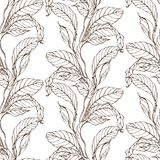 Vector monochrome seamless pattern with anthurium flowers and leaves Royalty Free Stock Images