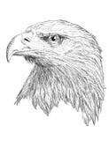 Vector monocromático principal de Eagle Imágenes de archivo libres de regalías