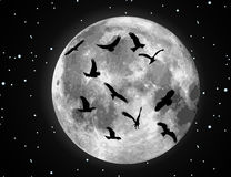 Vector moon illustration and birds. Vector moon illustration and bird silhouettes Stock Photos