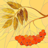 Vector mosaic illustration of rowan branch. Stock Photo