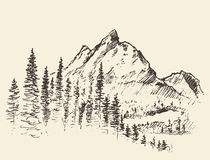 Vector mountain peak pine forest hand drawn. Vector illustration of a mountain peak with pine forest, engraving style, hand drawn Royalty Free Stock Images