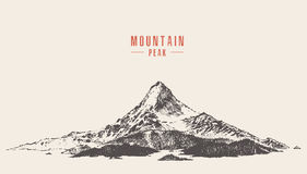 Vector mountain peak pine forest hand drawn. Vector illustration of a mountain peak with pine forest, engraving style, hand drawn Stock Images