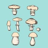 Vector mushroom set Stock Images
