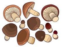 Vector mushroom Royalty Free Stock Photography