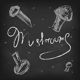 Vector mushrooms on black chalkboard. Vector white chalk mushrooms on black chalkboard royalty free illustration