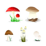 Vector mushrooms Royalty Free Stock Photography