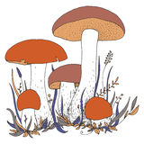Vector mushrooms and plants Stock Photography