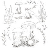 Vector mushrooms and plants Stock Photo