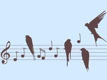Vector music notes and birds stock image
