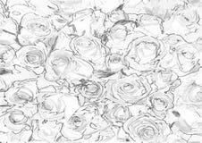 Vector Muster mit nahtlosen Rosen auf weißem Hintergrund Lizenzfreies Stockfoto