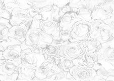 Vector Muster mit nahtlosen Rosen auf weißem Hintergrund Stockfotografie