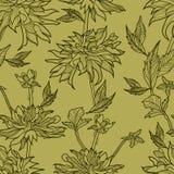 Vector naadloos bloemenpatroon met herbarium royalty-vrije illustratie