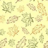 Vector naadloos de herfstpatroon met hand getrokken bladerenillustraties Royalty-vrije Stock Afbeelding