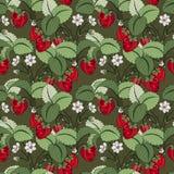 Vector Naadloos Gekleurd Fruitpatroon vector illustratie