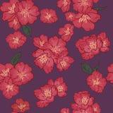 Vector naadloos patroon als achtergrond gevoelige roze Sakura-bloesem of Japanse bloeiende kers symbolisch van de Lente in willek royalty-vrije illustratie