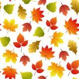 Vector naadloos patroon met de herfstbladeren vector illustratie