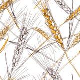 Vector naadloos patroon met hand getrokken oor van tarwe Hand getrokken geschetste illustratie Stock Afbeelding