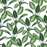 Vector naadloos patroon van tropische installaties op witte achtergrond stock illustratie