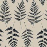 Vector naadloos patroon van varenbladeren Hand getrokken vectorillustratie royalty-vrije stock afbeeldingen